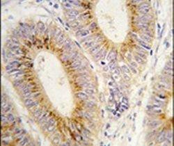 MARS2 Antibody (PA5-14993)