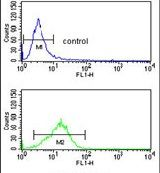 NCF4 Antibody (PA5-14593) in Flow Cytometry