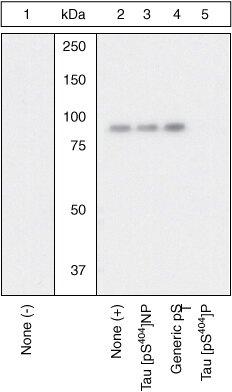 Phospho-Tau (Ser404) Antibody (OPA1-03143)