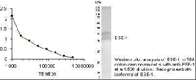 ELF3 Antibody (PA1-16864) in Western Blot