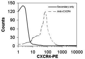 CXCR4 Antibody (PA1-22486)