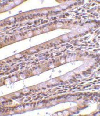 PHAP Antibody (PA1-30727)