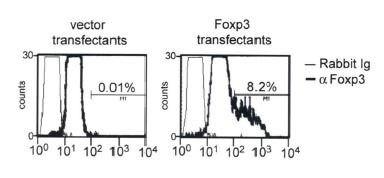 FOXP3 Antibody (PA1-46126) in Flow Cytometry