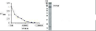 Acinus Antibody (PA1-46272)