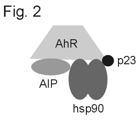 AIP Antibody (PA1-514) in Not applicable