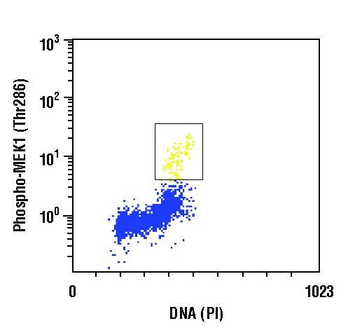 Phospho-MEK1 (Thr286) Antibody (PA5-17664) in Flow Cytometry