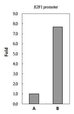 PAX8 Antibody (PA5-21368) in ChIP assay