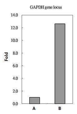 Histone H2A.Z Antibody (PA5-21923) in ChIP assay