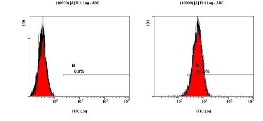 CCR2 Antibody (PA5-23043) in Flow Cytometry