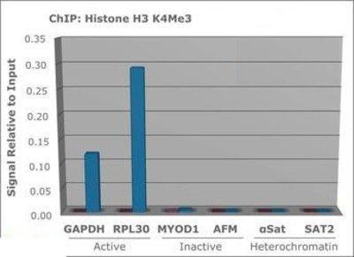 Tri-Methyl-Histone H3 (Lys4) Antibody (PA5-27029) in ChIP assay