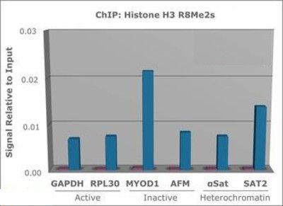 Di-Methyl-(Sym)-Histone H3 (Arg8) Antibody (PA5-27039) in ChIP assay