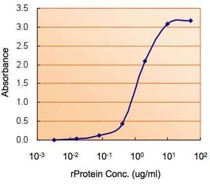 AMPK alpha-2 Antibody (PA5-29679) in ELISA