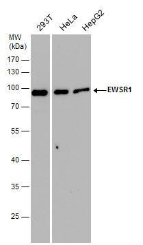 EWSR1 Antibody (PA5-29905) in Western Blot