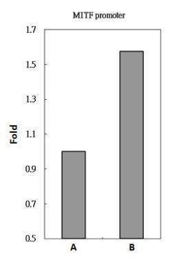 POU3F2 Antibody (PA5-30124) in ChIP assay