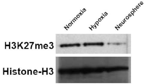Tri-Methyl-Histone H3 (Lys27) Antibody (PA5-31817) in Western Blot