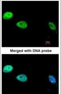 POLD1 Antibody (PA5-34678)