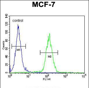 USF1 Antibody (PA5-35031) in Flow Cytometry