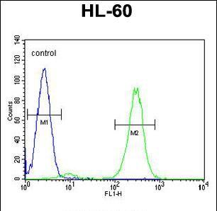 FBXW11 Antibody (PA5-35037) in Flow Cytometry