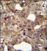 Cyclin I2 Antibody (PA5-35081) in Immunohistochemistry (Paraffin)