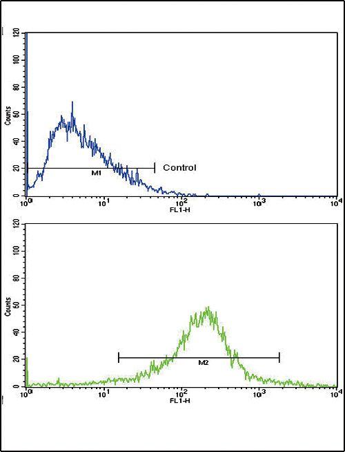 RAP Antibody (PA5-35336) in Flow Cytometry