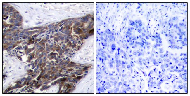 Phospho-Connexin 43 (Ser367) Antibody (PA5-37585) in Immunohistochemistry (Paraffin)