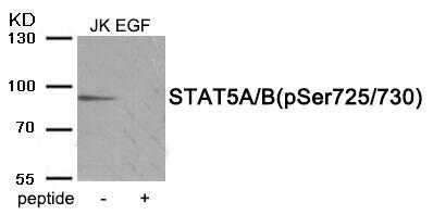 Phospho-STAT5 alpha/beta (Ser725, Ser730) Antibody (PA5-37815)
