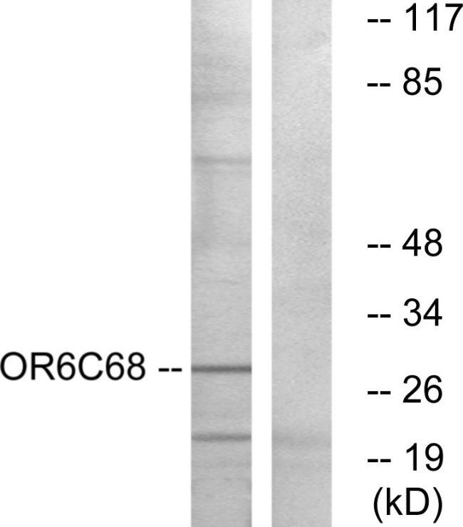 OR6C68 Antibody (PA5-38190)