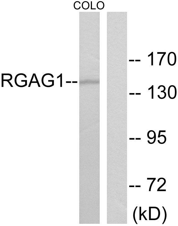 RGAG1 Antibody (PA5-38736)