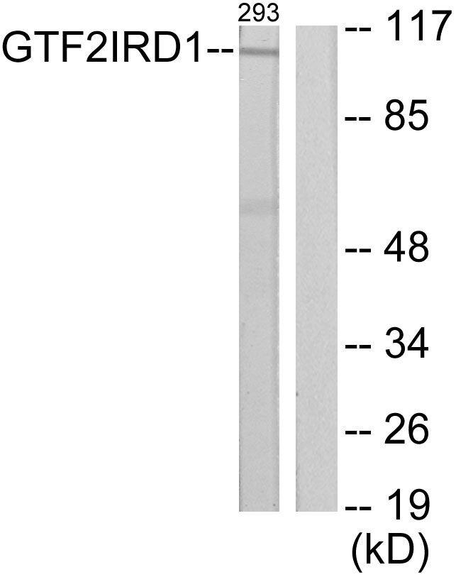 GTF2IRD1 Antibody (PA5-38823)