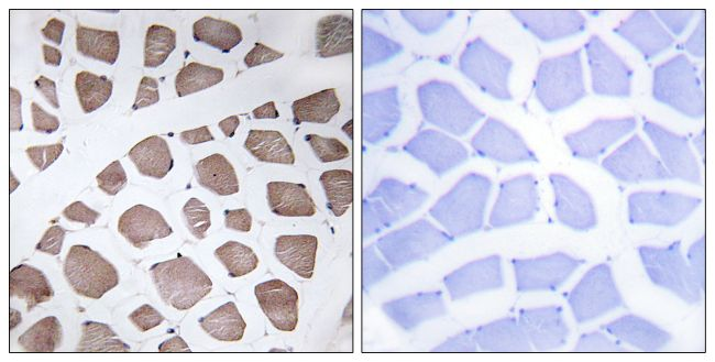 MRPS18C Antibody (PA5-38951) in Immunohistochemistry (Paraffin)