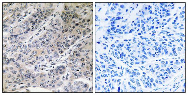 BRP44 Antibody (PA5-39061)
