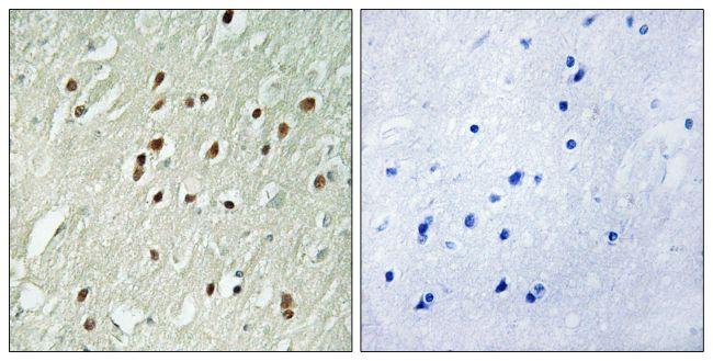 CNTROB Antibody (PA5-39087)