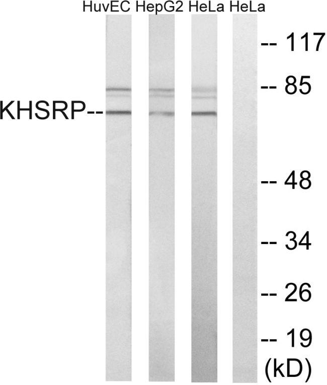 KHSRP Antibody (PA5-39167)