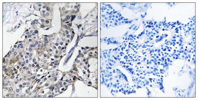 GBP4 Antibody (PA5-39202) in Immunohistochemistry (Paraffin)