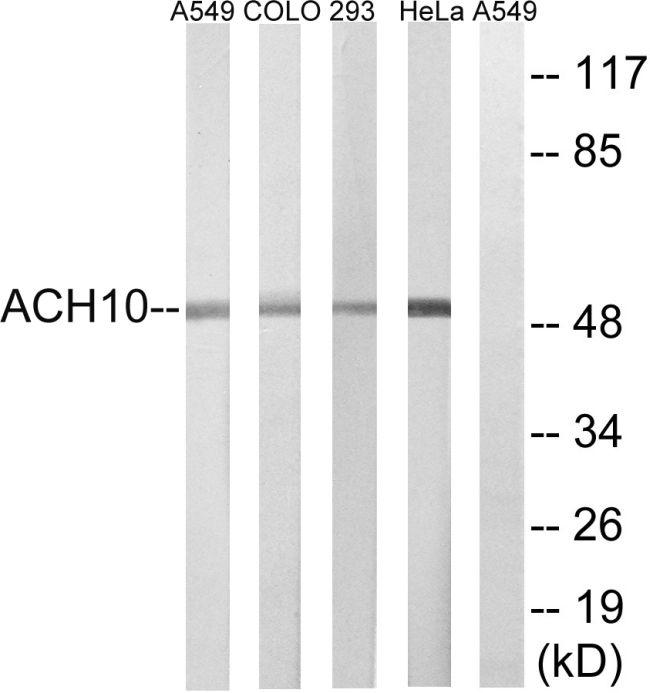 CHRNA10 Antibody (PA5-39298)