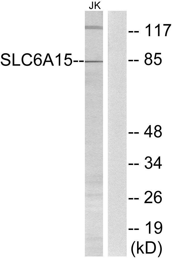 SLC6A15 Antibody (PA5-39325)