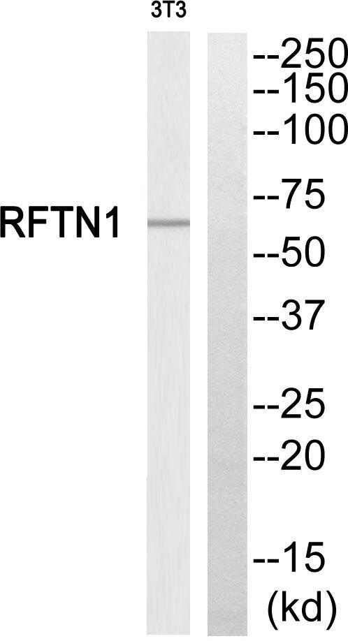REPS1 Antibody (PA5-39392)