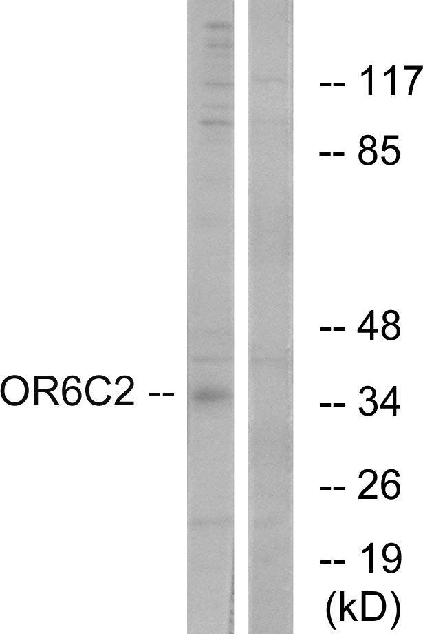 OR6C2 Antibody (PA5-39662)
