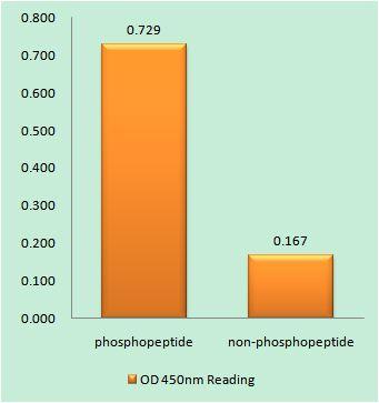 Phospho-FHIT (Tyr114) Antibody (PA5-39824) in peptide-ELISA