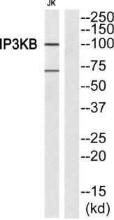 ITPKB Antibody (PA5-39866)
