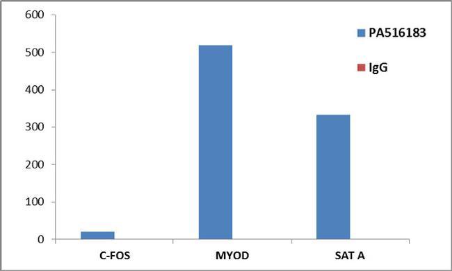 Histone H3 Antibody (PA5-16183) in ChIP assay