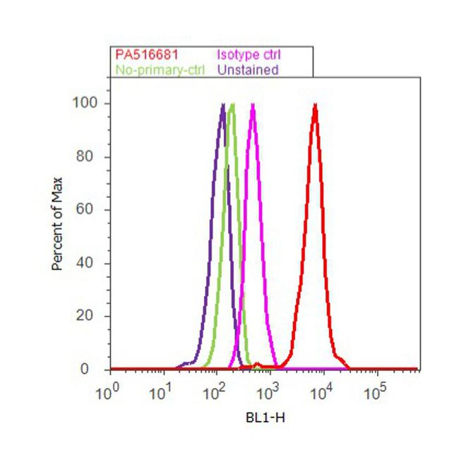 Calretinin Antibody (PA5-16681) in Flow Cytometry