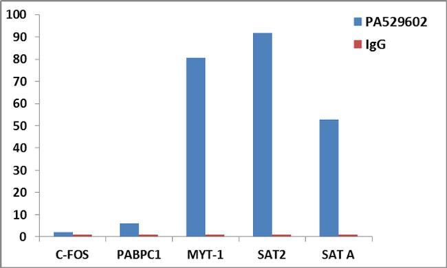 Histone H3.3 Antibody (PA5-29602) in ChIP assay