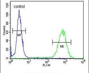 PCDH17 Antibody (PA5-26834) in Flow Cytometry