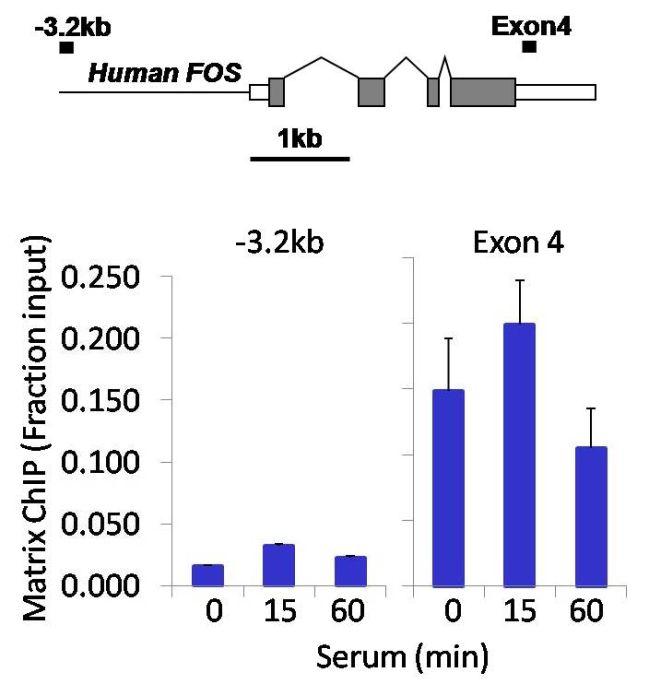PDGFRA Antibody (701142) in ChIP assay