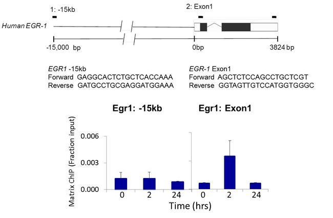 PRKAR2A Antibody (MA3-517) in ChIP assay