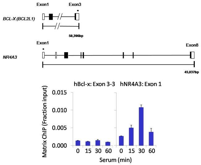 PP5 Antibody (PA5-19540) in ChIP assay