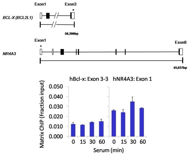 PP1 alpha Antibody (PA5-28218) in ChIP assay