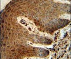 PTMS Antibody (PA5-26287) in Immunohistochemistry