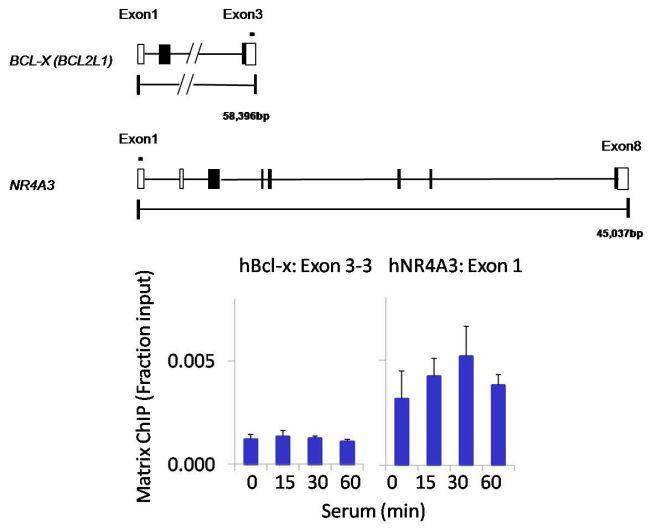 PTPN12 Antibody (PA5-27733) in ChIP assay